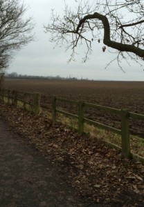 Suffolk fields in winter