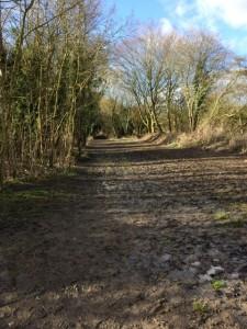 Rather muddy Lavenham Walk footpath.